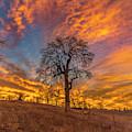 Winter Sunrise by Jonathan Hansen