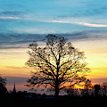 Winter Sunset Oak by Tim Gainey