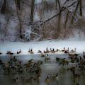 Winter Swim by Edward Peterson