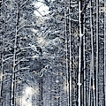 Winter Travel I by Anne Leven