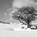 Winter Tree by Helen Northcott