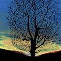 Winter Tree Sunset by D Hackett