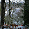 Winter Woodland View by Phil Banks