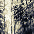 Winter's Forest by Lori Dobbs