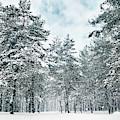 Winter's Tale IIi by Anne Leven
