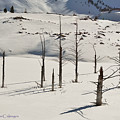 Wintertime At Quake Lake by Kae Cheatham