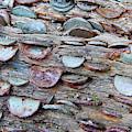 Wish Tree I by Helen Northcott