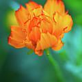 Wispy Orange by Robert FERD Frank