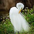 Wispy White Feathers by Sabrina L Ryan