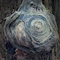Wood Log In Nature No.42 by Juan Contreras