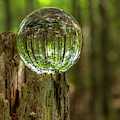Wooded Reflections by Karin Pinkham