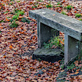 Wooden Autumn Bench by Scott Lyons