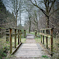 Wooden Bridge Forest Path by Scott Lyons