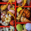Wooden Compartments Full Of Seashells by Garry Gay