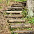 Wooden Stairs On A Forest Trail by Les Palenik