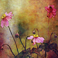 Woods Rose 3863 Idp_wr _2 by Steven Ward