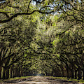 Wormsloe Oak Alley by Framing Places