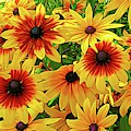 Yellow And Burnt Orange Rudbeckia Coneflowers With Abstract Expressionistic Effect by Rose Santuci-Sofranko