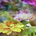 Yellow And Pink Zinnia 1305 Idp_2 by Steven Ward