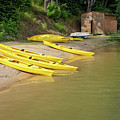Yellow Boats In A Sports Club by Dubi Roman
