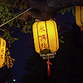 Yellow Chinese Lanterns On Wire Illuminated At Night  by Karen Foley