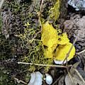 Yellow Enveloping White by Hunted Gatherings