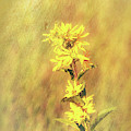 Yellow Flowers by Dan Sproul
