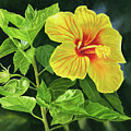 Yellow Hibiscus With Bright Green Leaves by Sharon Freeman