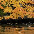 Yellow On Water by Dan Friend