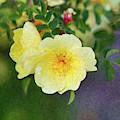 Yellow Rose - Blending Dreams - By Omaste Witkowski by Omaste Witkowski