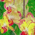 Yellow/rouge Orchids by Nigel Dudson