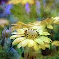 Yellow Soul 6425 Idp_2 by Steven Ward