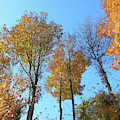Yellowish Autumn Trees by Rockin Docks