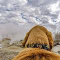 Yellowstone By Photo Dog Jackson by Matthew Irvin