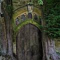 Yew Trees II by Brian Jannsen