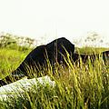 Young Elephant, Okavango Delta by Michele Westmorland