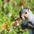 Your Friendly Neighborhood Squirrel by Karol Livote