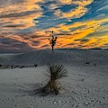 Yucca Sunset Skies At White Sands, New Mexico  by Chance Kafka