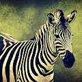 Zebra by Angela Doelling AD DESIGN Photo and PhotoArt