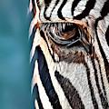 Zebra by Russ Carts
