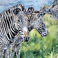 Zebras by Maria Reichert