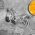 Zebras No 02 by iMia dEsigN