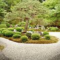 Zen Garden by Caroline De Vries