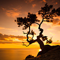Zen Is A Tree On The Cliff Rocks And by Yarygin