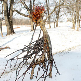 Creating With Nature Class in Kirkwood MO starting soon