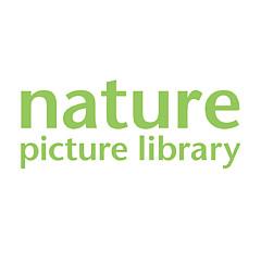 Loic Poidevin / Naturepl.com