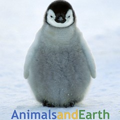 Animals and Earth - Artist