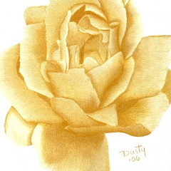 Dusty Roses - Artist