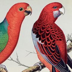 Australia Prints - Artist