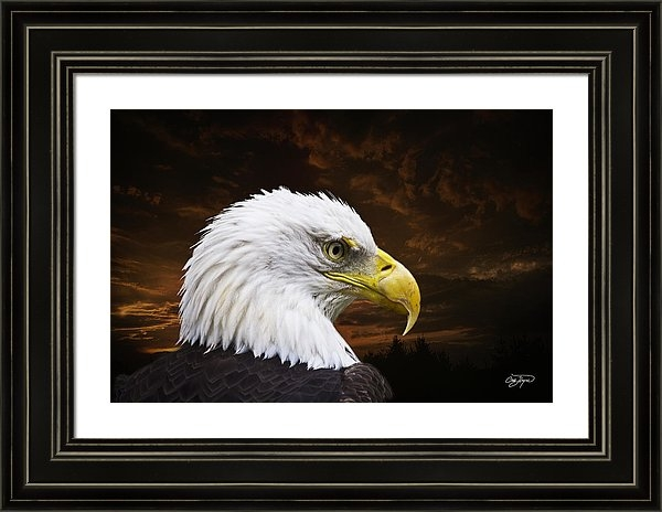 Cris Hayes - Bald Eagle - Freedom and ... Print